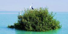 جنگلهای دریایی حرا