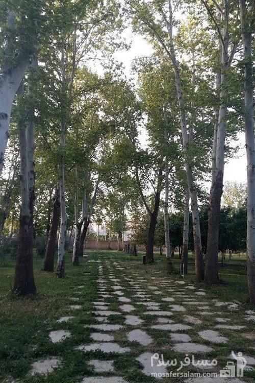 درختان باغ عفیف آباد در شیراز