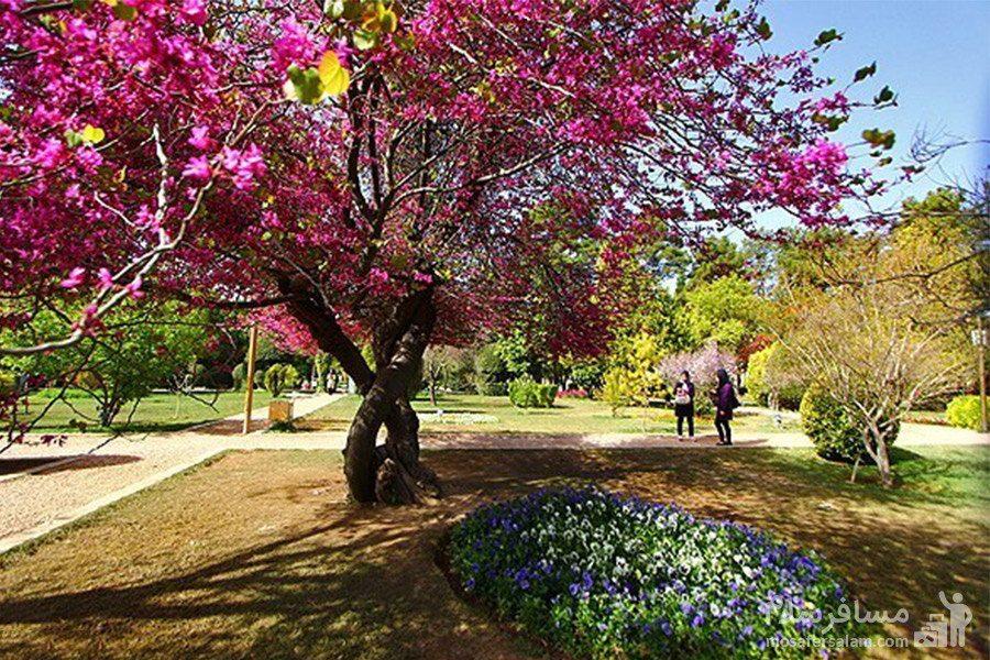بهار در باغ ارم شیراز