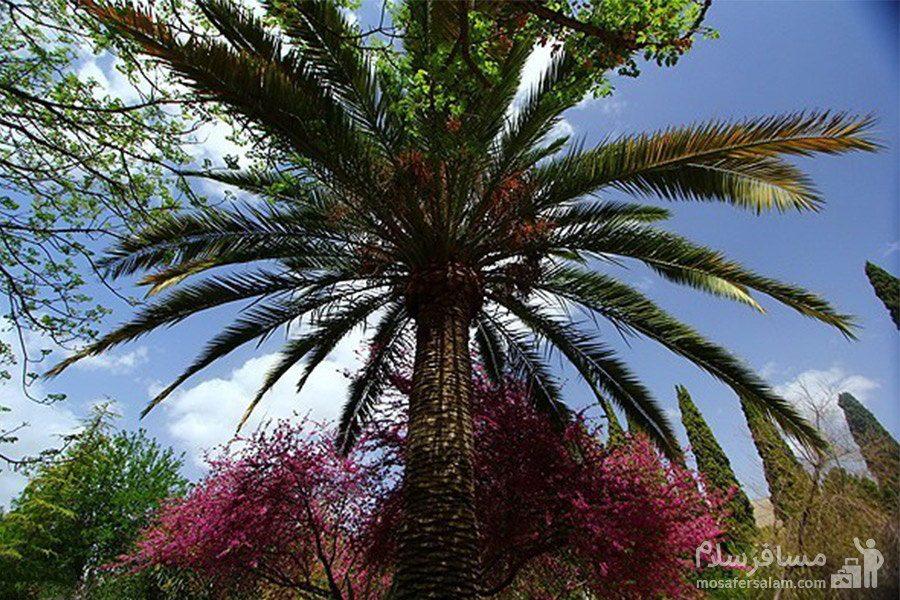 نمایی از درختان باغ ارم شیراز