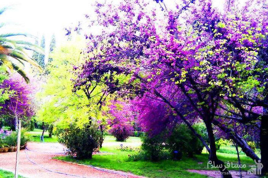 فصل بهار در باغ ارم