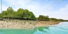 جنگل های دریایی حرا قشم