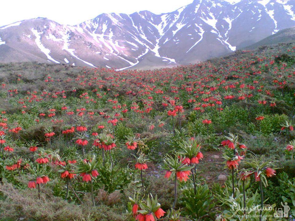 گلستان کوه