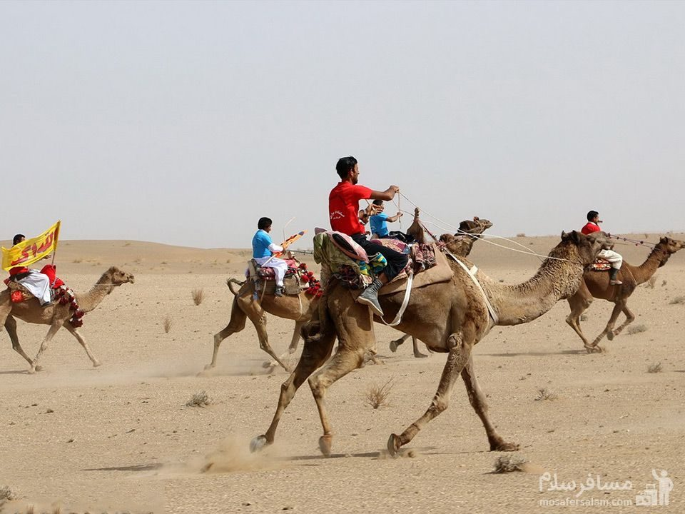 مسابقه شتر سواری