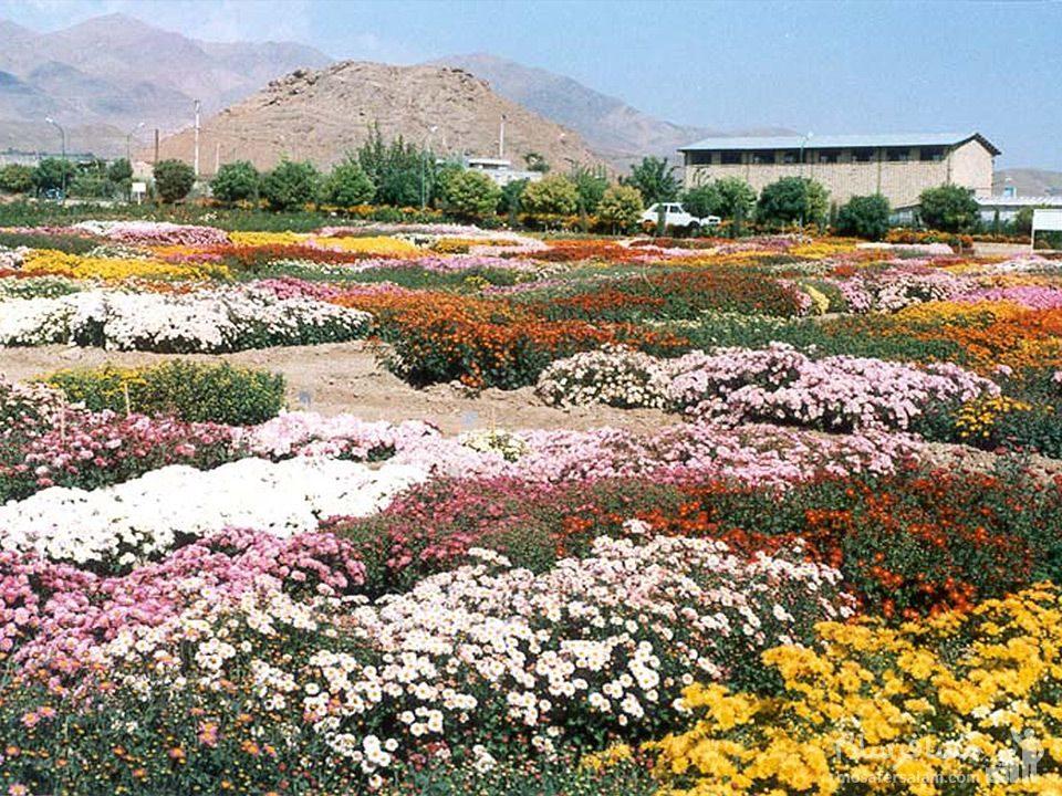 گل باغ های محلات