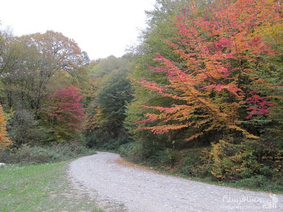 جنگل خانیکان