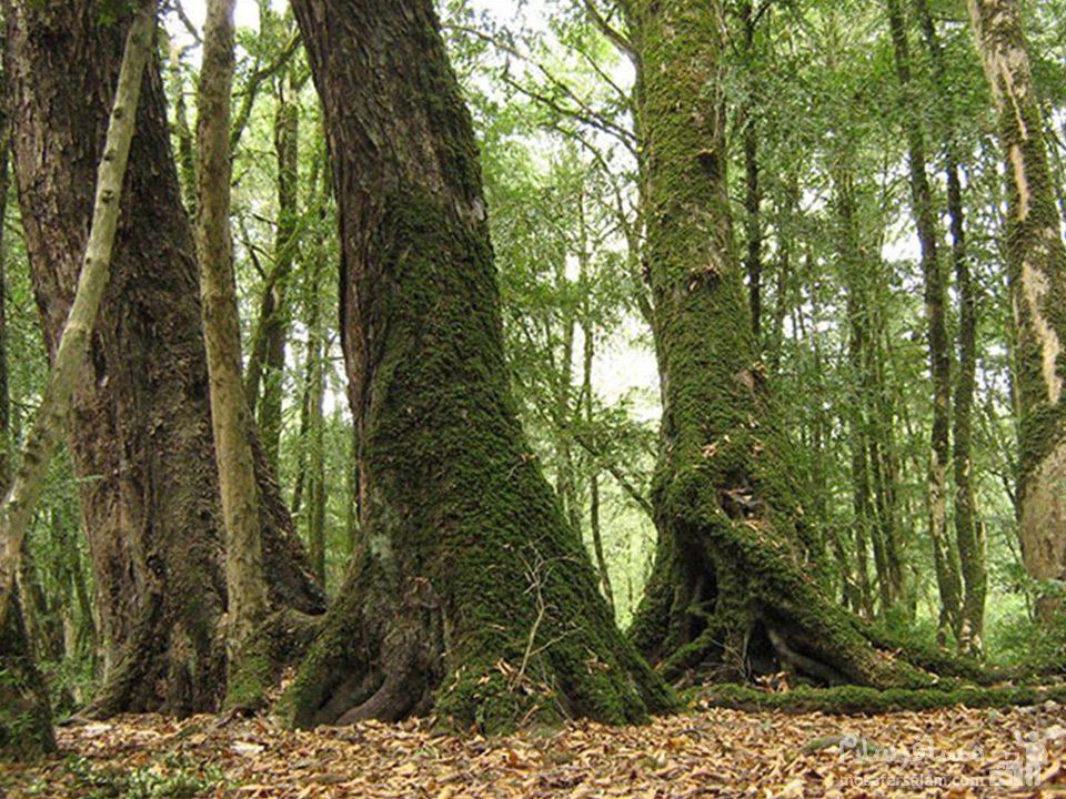 پارك جنگلي سيسنگان