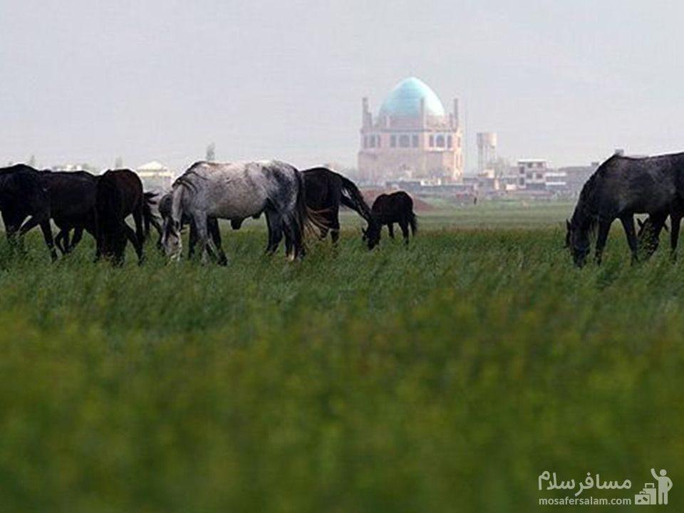 طبیعت سلطانیه