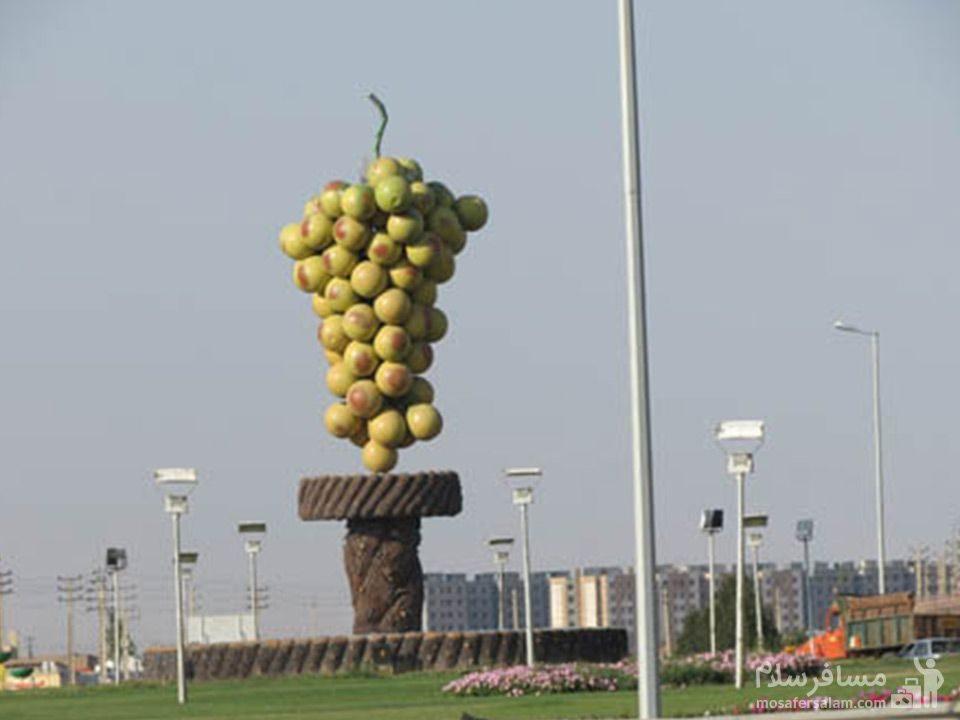 نماد انگور تاکستان