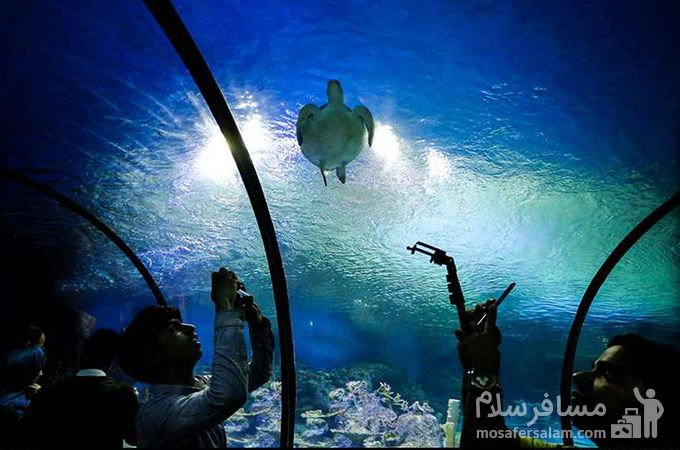akvariom02