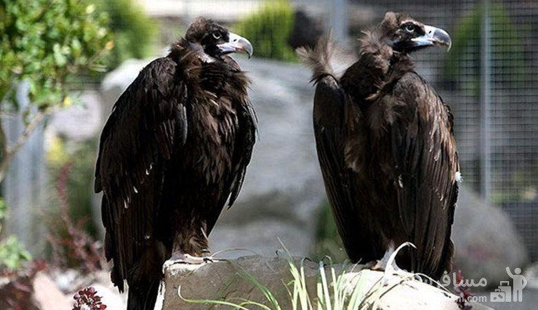 انواع پرندگان وحشی