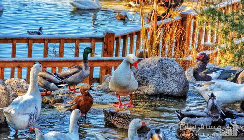 دریاچه کوچک پرندگان
