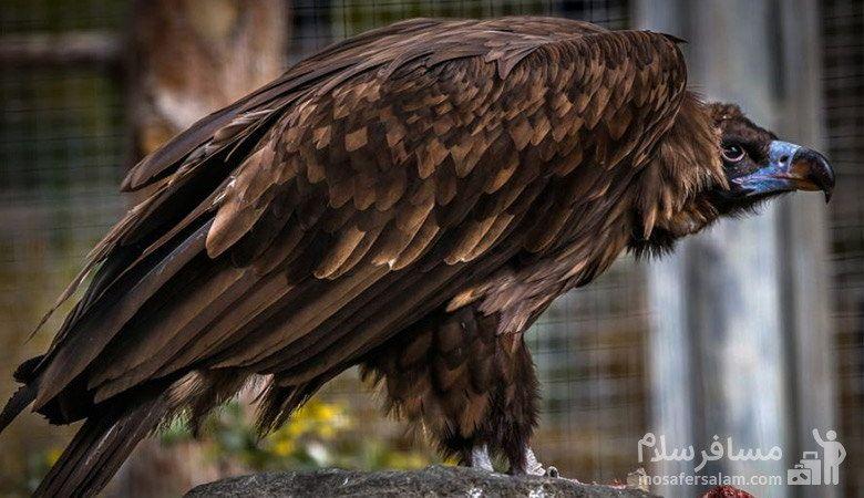 تصویر زیبای عقاب