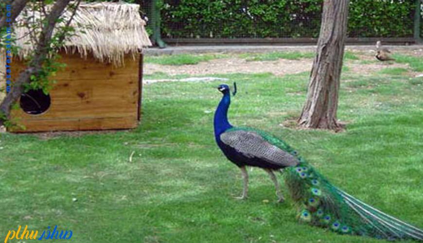 باغ پرندگان ایران