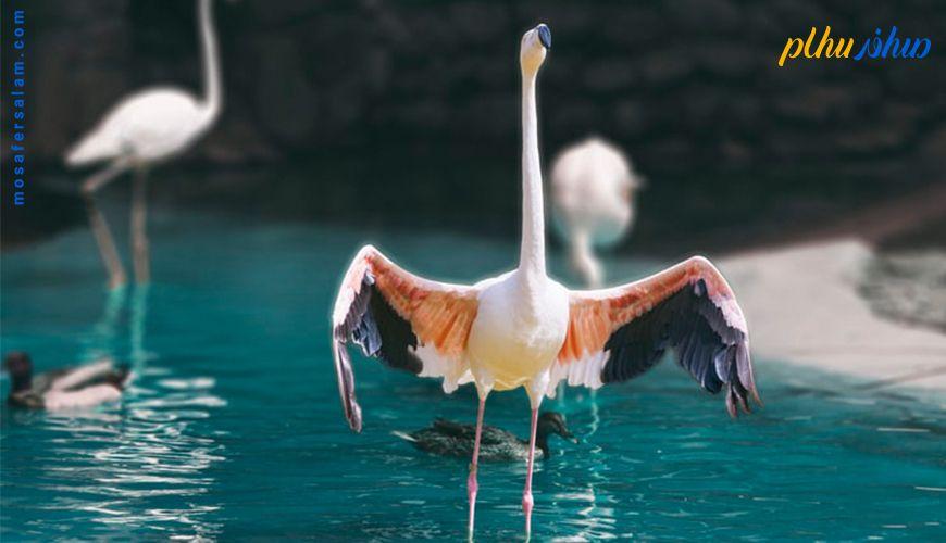 باغ پرندگان مشهد تنها باغ پرندگان شرق کشور