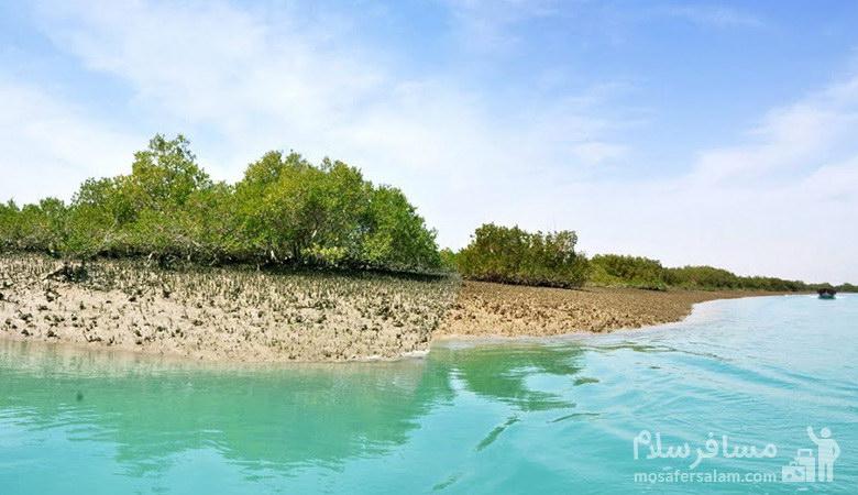 جنگل های دریایی حرا