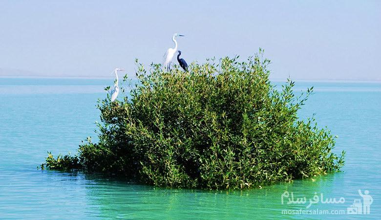 پرندگان در حرا