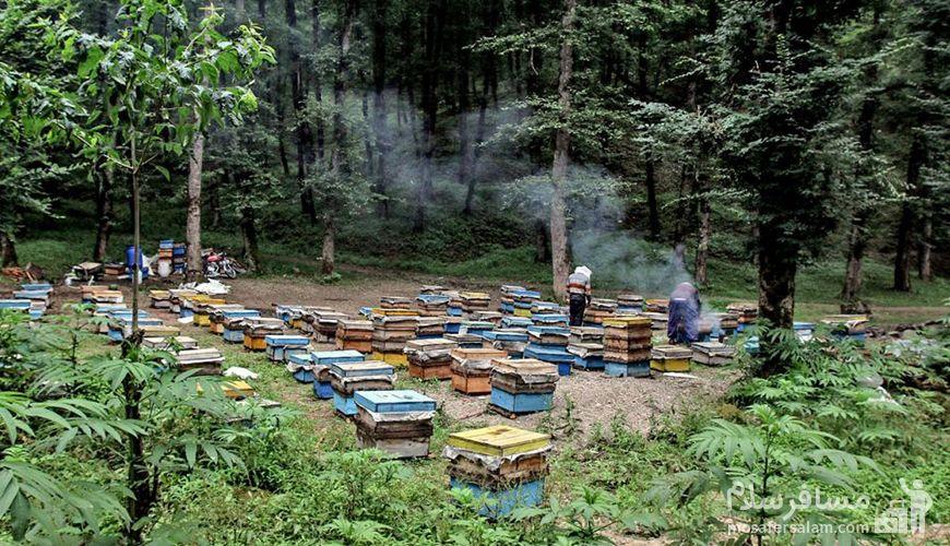 عسل در جاده خلخال به اسالم