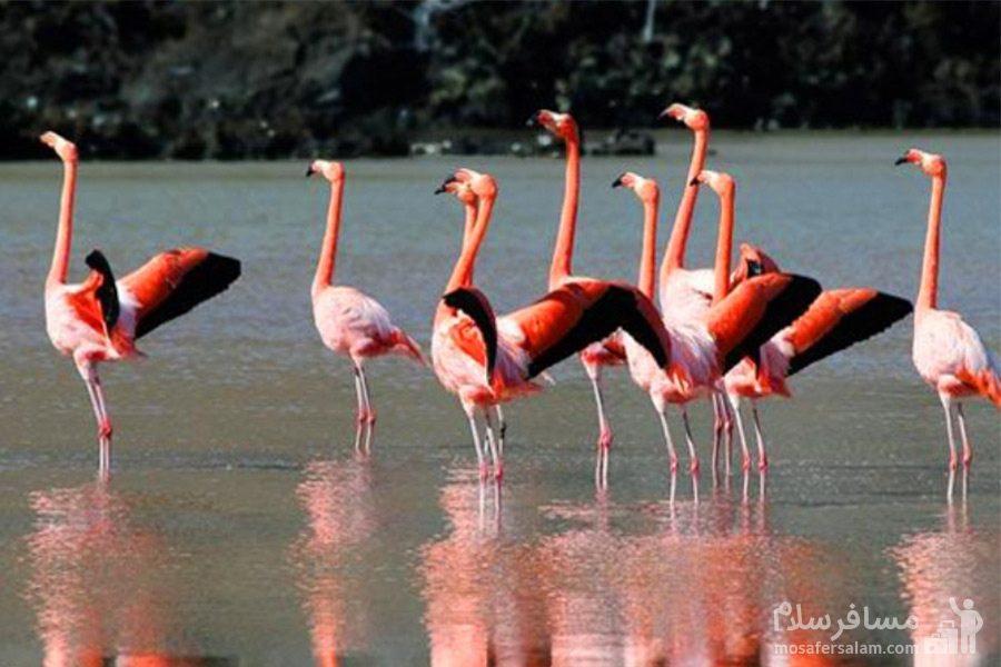 پرندگان در تالاب میقان