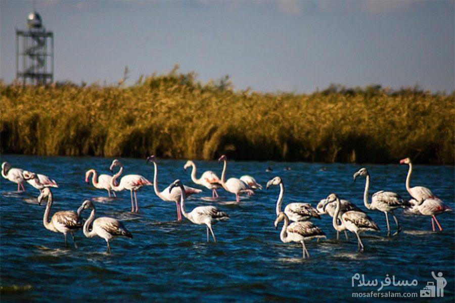 تالاب میقان-پرندگان