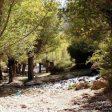 درختان اطراف چشمه قلقل دامغان