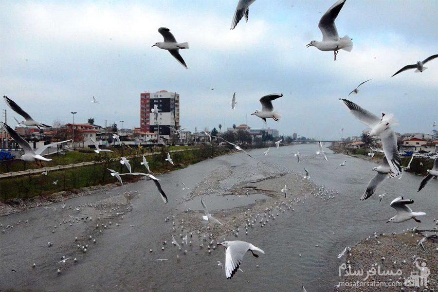 پرندگان مهاجر چشمه کیله