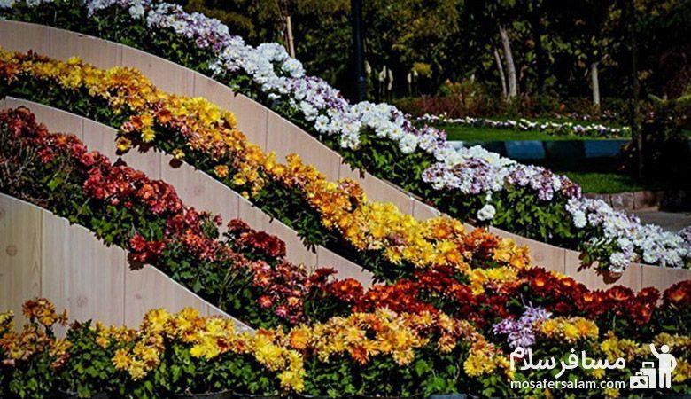 جشنواره گل های داوودی