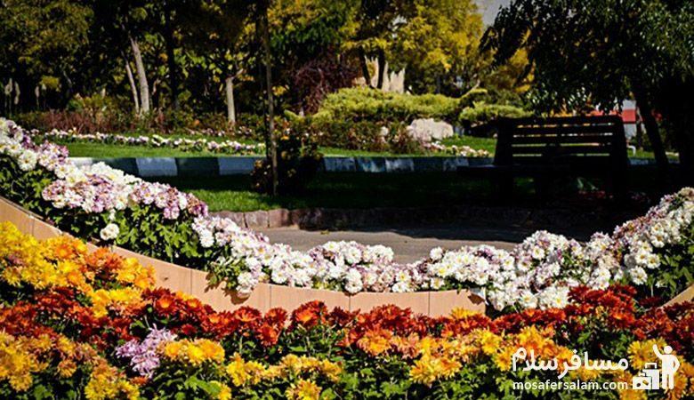گل های داوودی باغ گیاه شناسی مشهد