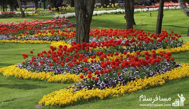 رزهای بهاری پارک ملت مشهد