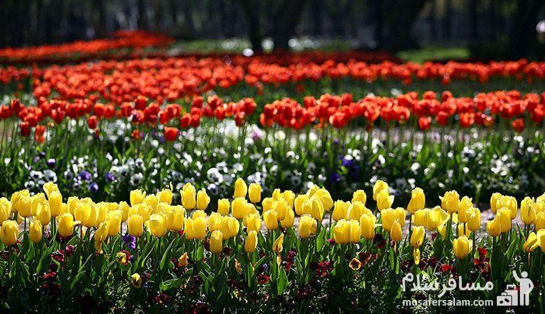 رزهای پارک ملت مشهد