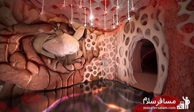 اندام انسان در پارک علمی پروفسور بازیما