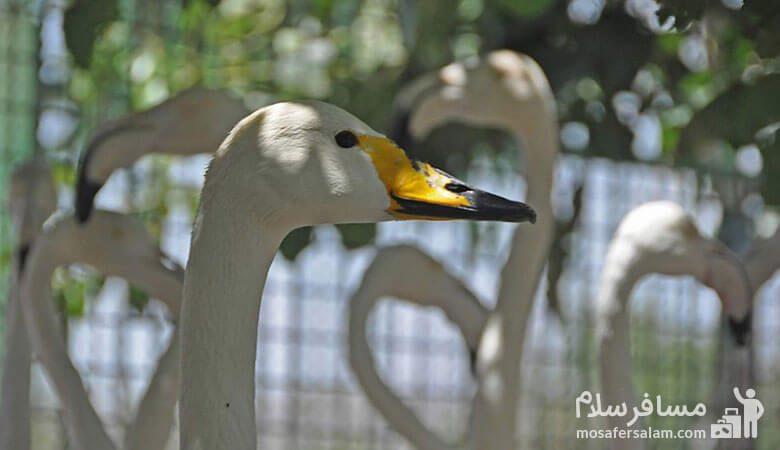 پرنده گان باغ وحش وکیل آباد