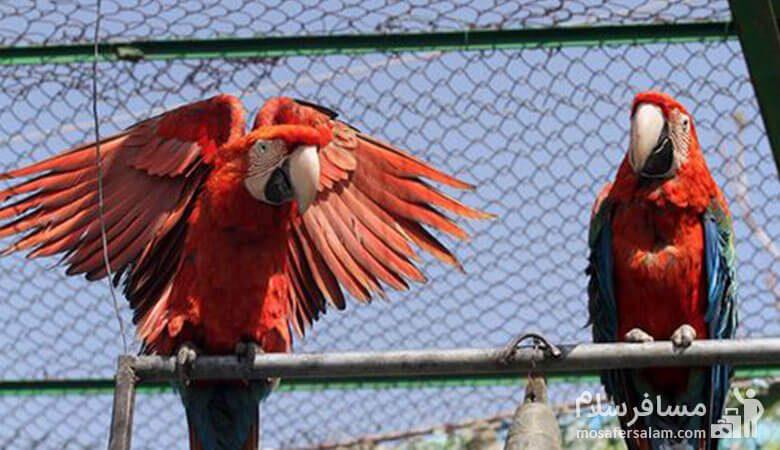 پرنده باغ وحش وکیل آباد