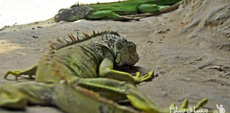 مارمولک باغ وحش وکیل آباد