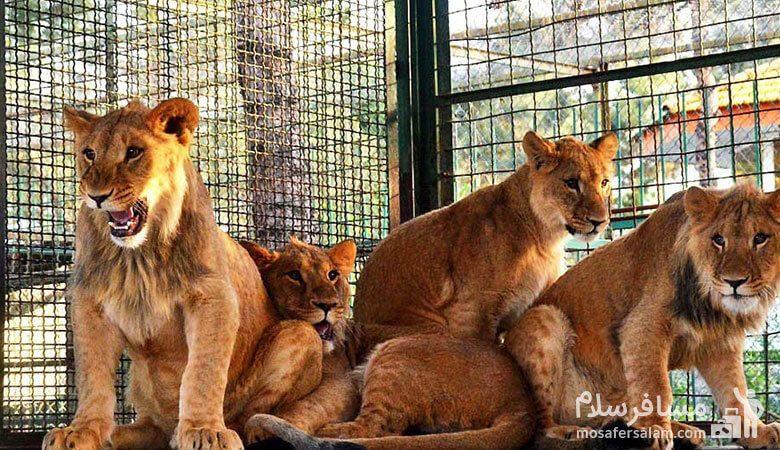 حیوانات وحشی باغ وحش وکیل آباد