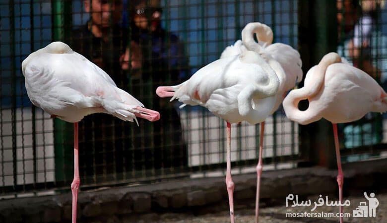 پرندگان باغ وحش وکیل آباد