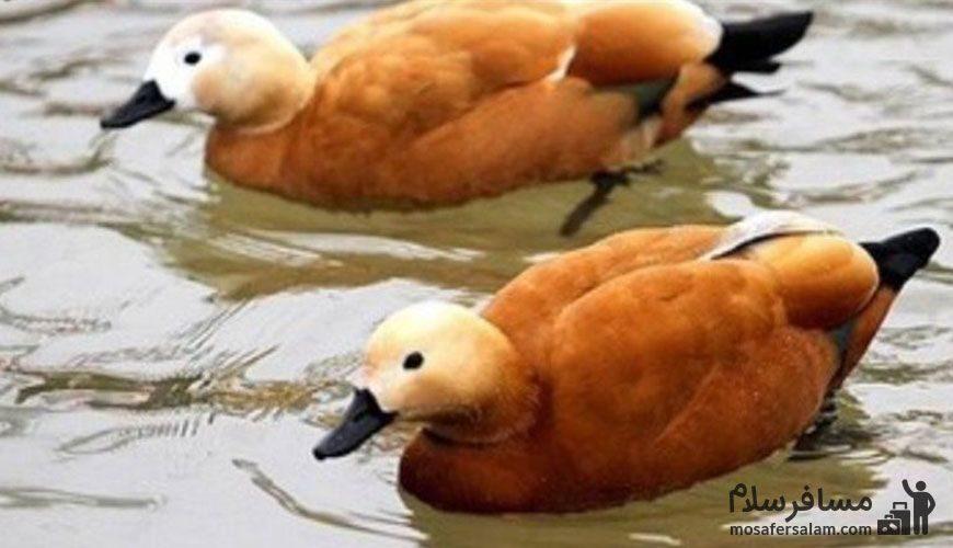 پرندگان در باغ پرندگان مشهد