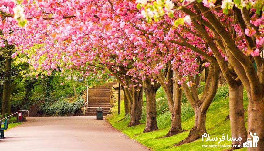 سفر به مشهد در فصل بهار