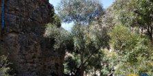 دره شمخال مشهد