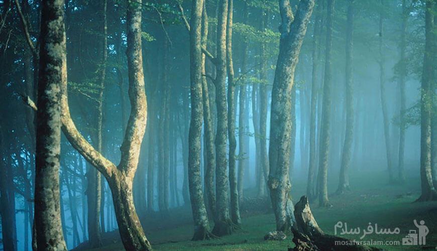 مناطق بکر شمال | جنگل مه آلود پاسند