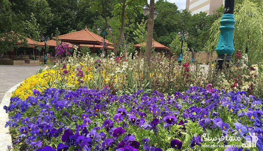 نمایی زیبا از باغ تمشک