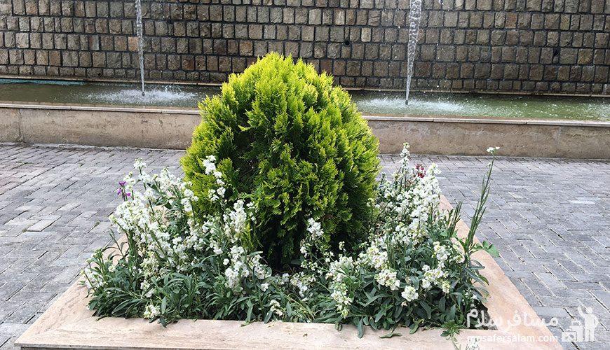 نمایی از باغچه باغ تمشک