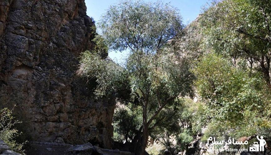 درختان دره شمخال