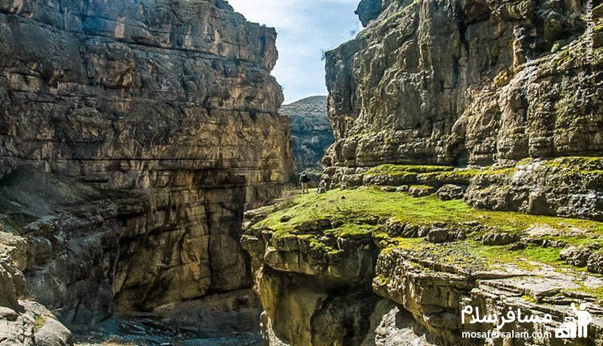 منظره ای از کوه سرسبز
