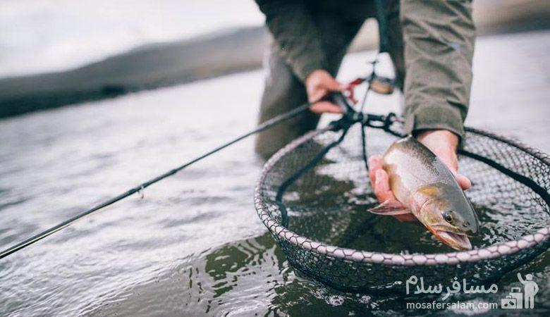 ماهی قرل آلا دریاچه تار