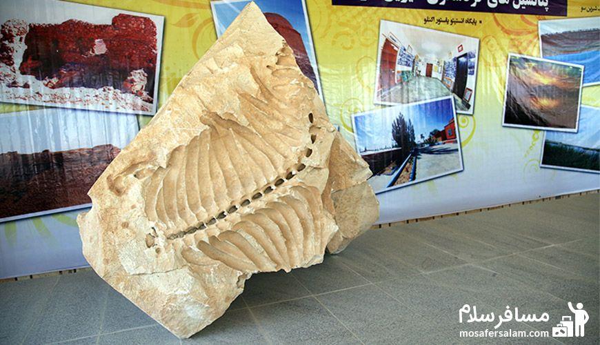 موزه فسیلی دریایی | کبودرآهنگ