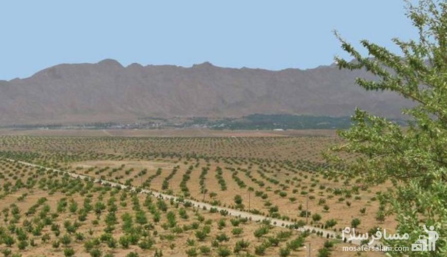 بزرگترین باغ گردو جهان
