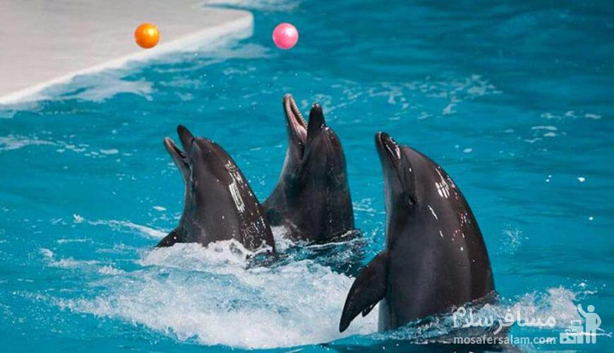 پارک دلفین ها, جزیره کیش, رزرواسیون مسافر سلام