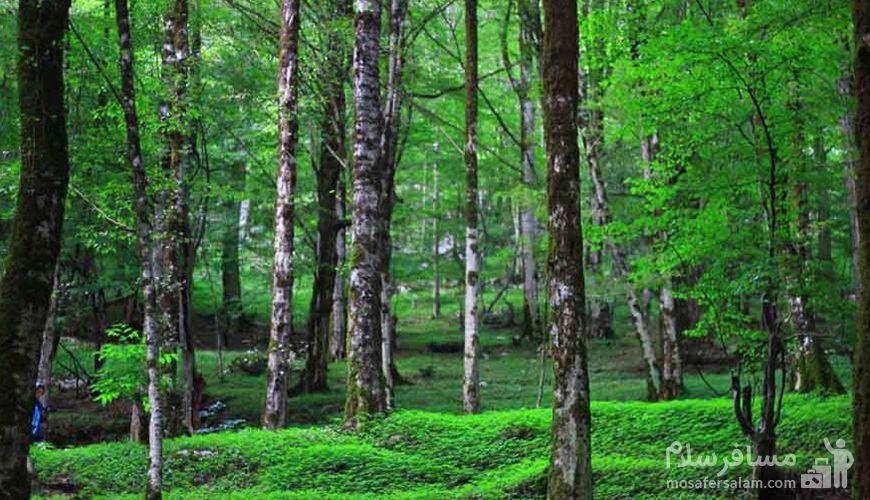 پارک جنگلی سیسنگان, سفر به تاج سرسبز ایران