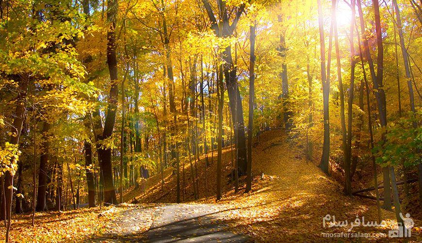 جنگل ابر شاهرود, گروه گردشگری مسافر سلام